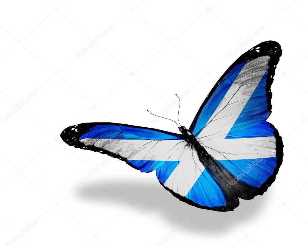 scottish flag butterfly flying isolated on white background