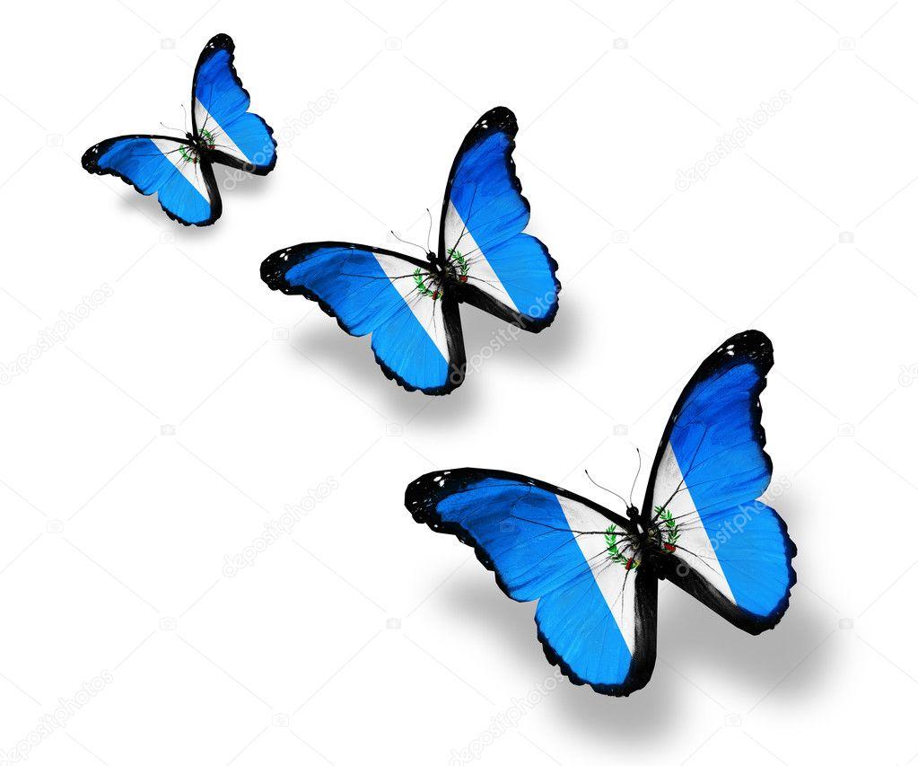 Three Guatemala flag butterflies