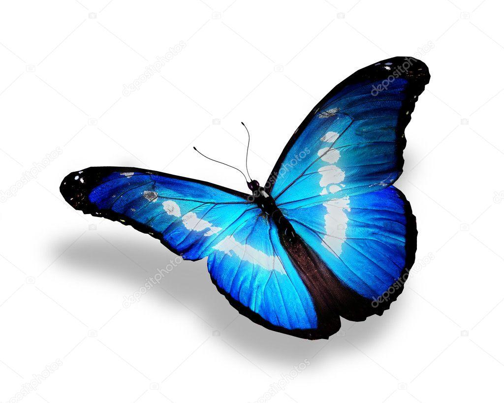 Farfalla Blu Isolato Su Sfondo Bianco Foto Stock Suntiger