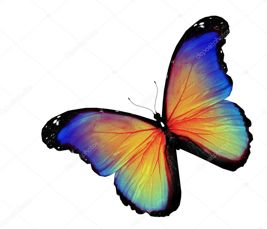 Blue yellow butterfly on white background