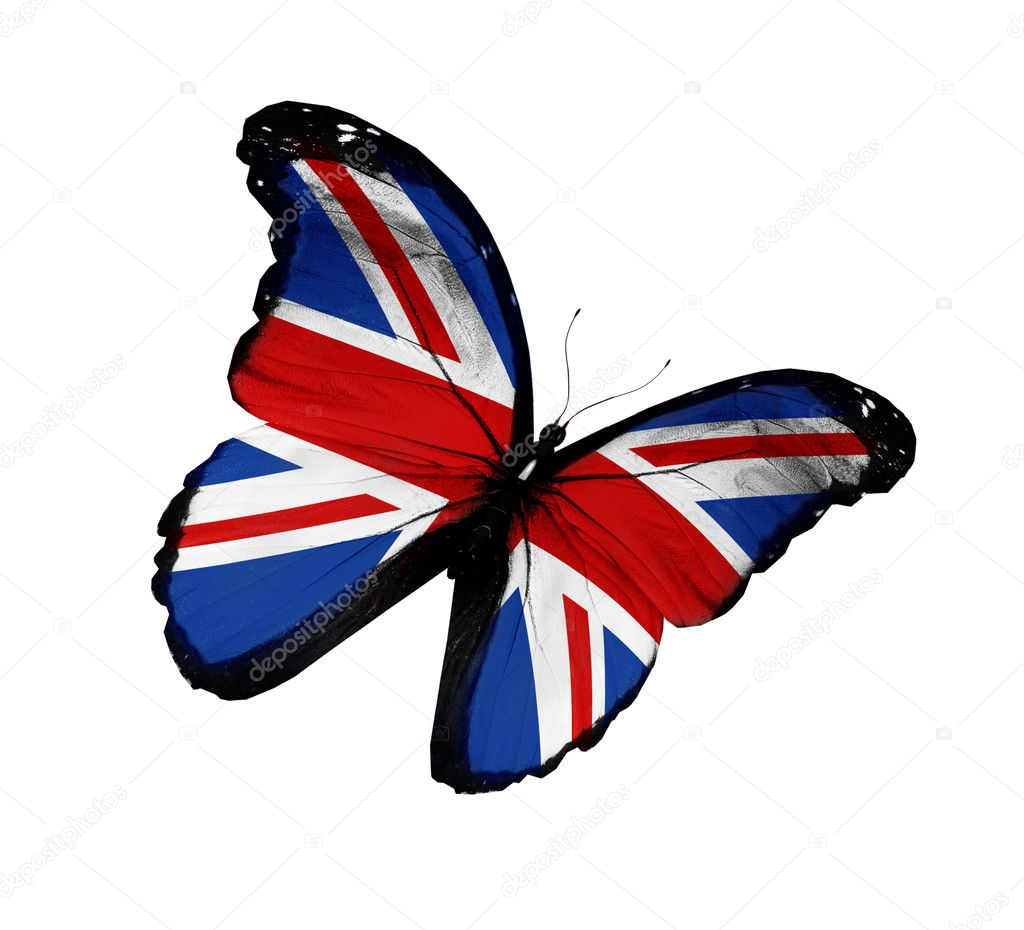 English flag butterfly flying, isolated on white background