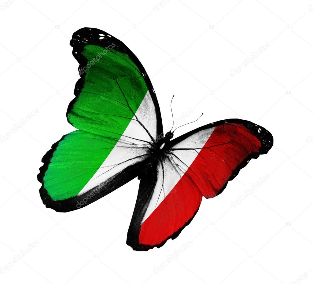 Italian flag butterfly flying, isolated on white background