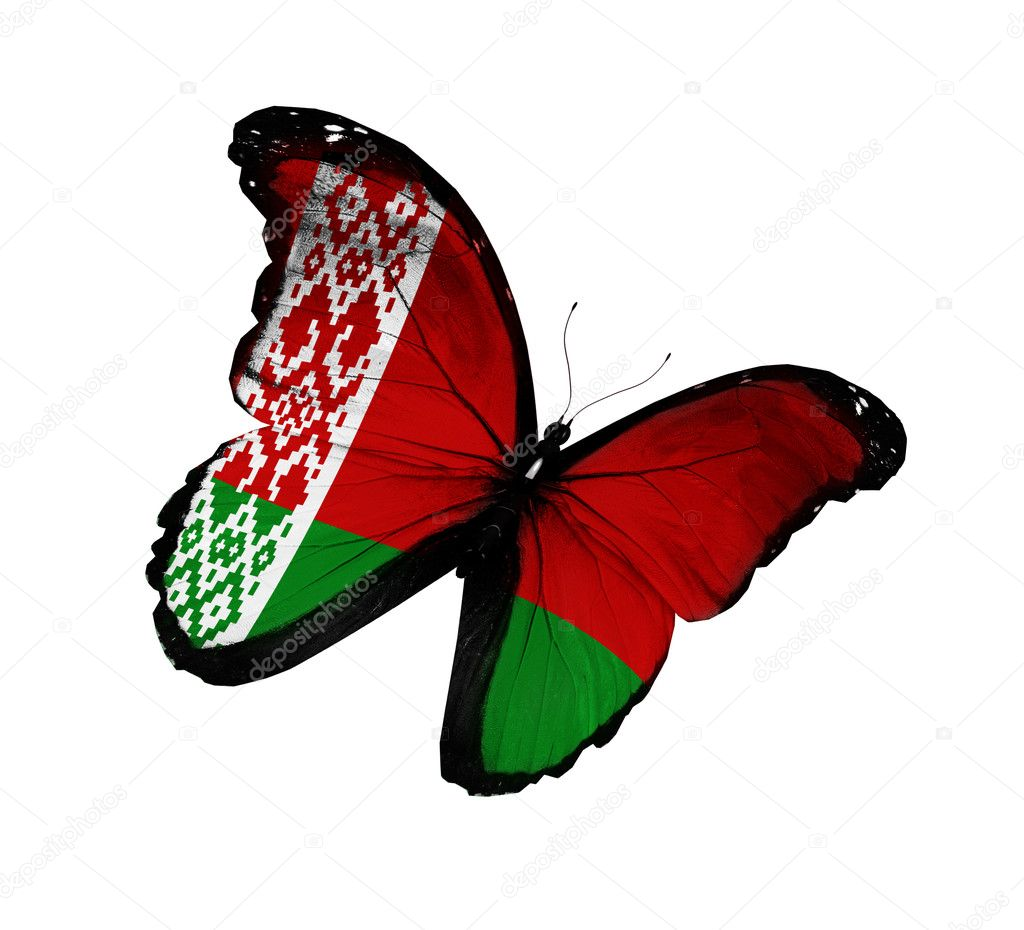 Belarusian flag butterfly flying, isolated on white background