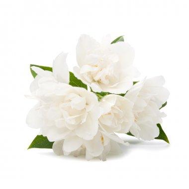 White flowers on white background stock vector
