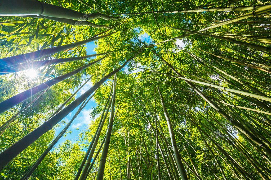 Фотообои Bamboo