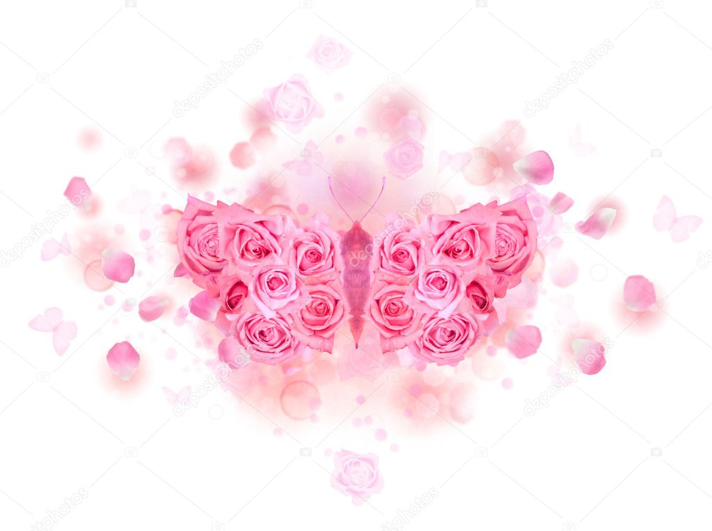 Pink rose butterfly buds
