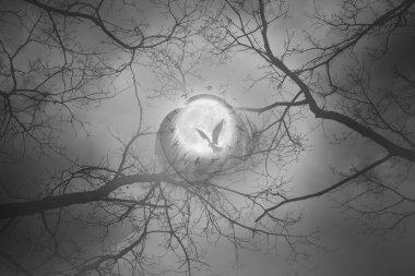 Mystic moon bird circle
