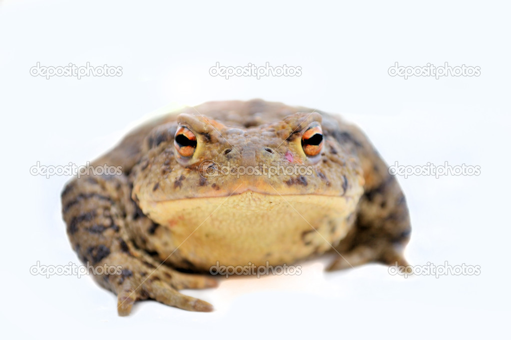 toad on the road stock photo romdersen 10802658
