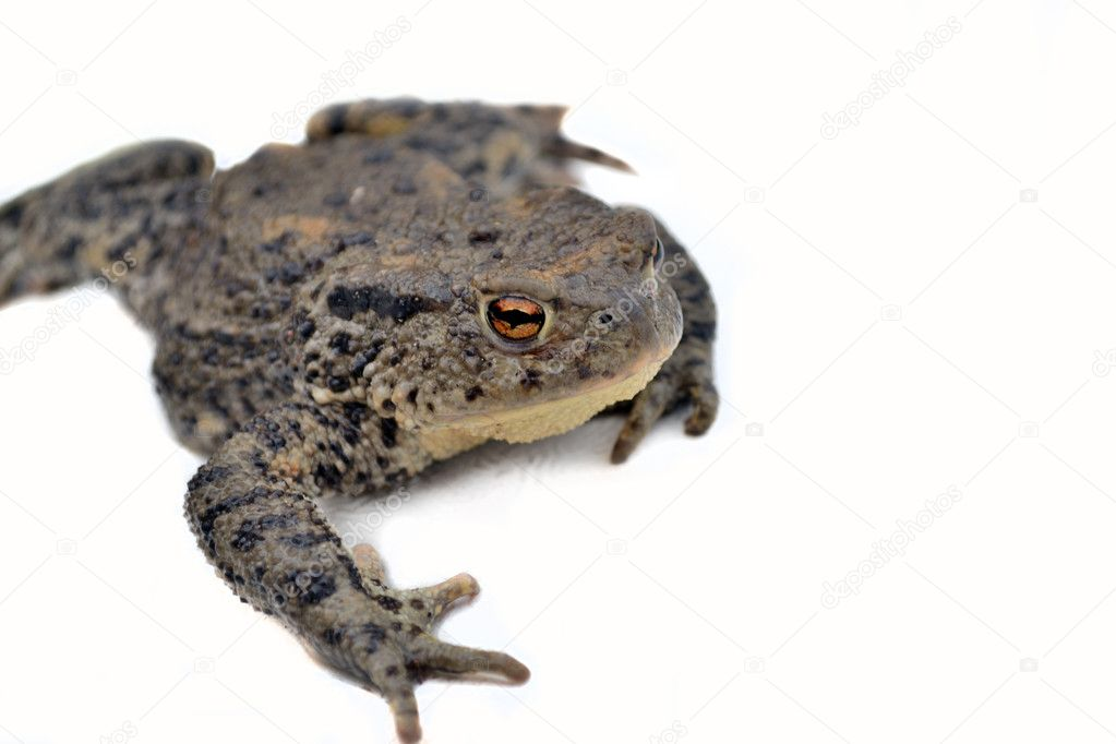 toad on the road stock photo romdersen 10802673
