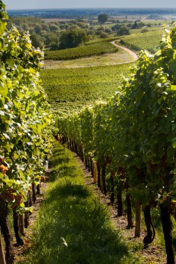 Wine route in Alsace