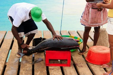 Fresh fish and fisherman in Santa Maria, Sal Island, Cape Verde