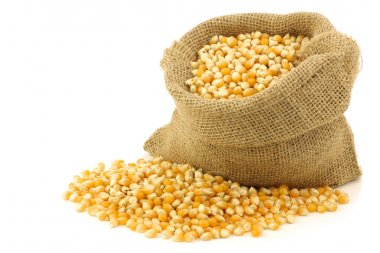 Yellow corn grain in a burlap bag
