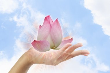 Pink lotus in woman hand on sky background.