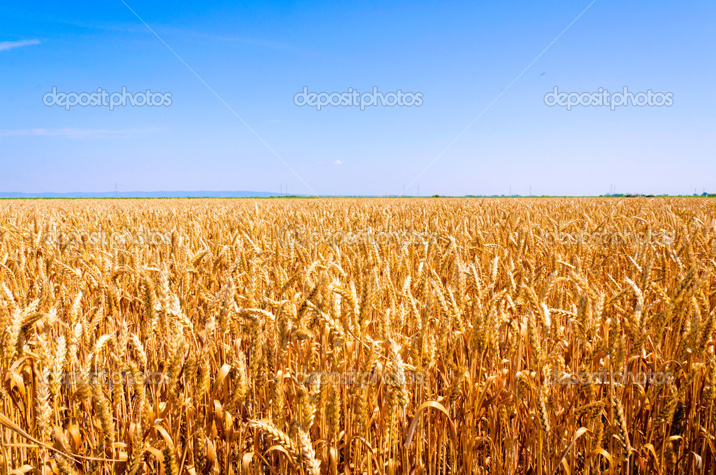 Horizont field