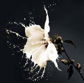 Fotografie Úvodní bílé květy