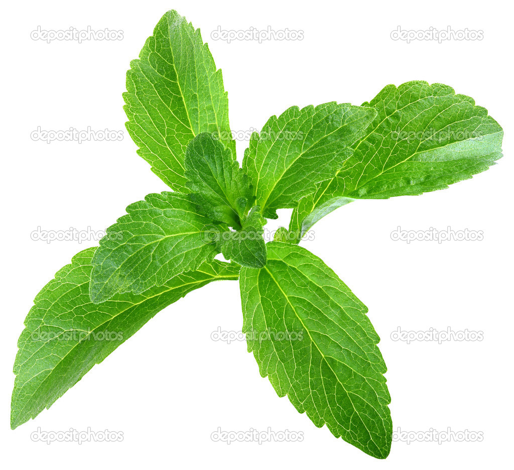 Stevia Rebaudiana Leafs Cut Out
