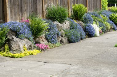 Urban garden planted along sidewalk