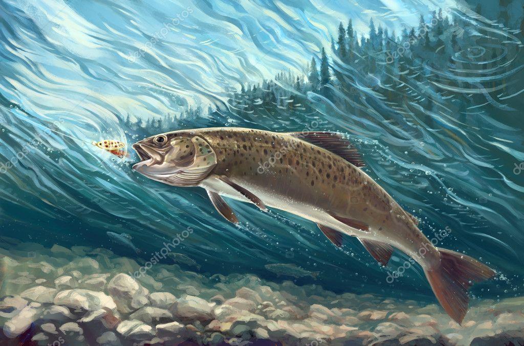 Siberian trout