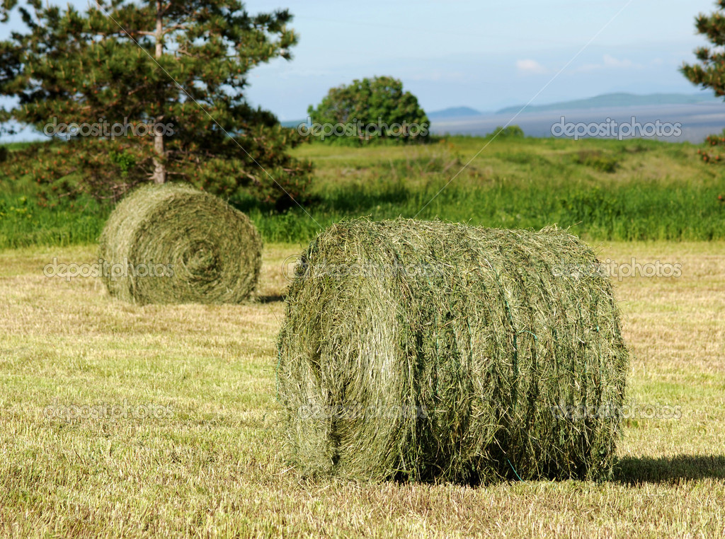Two Hay Rolls in field