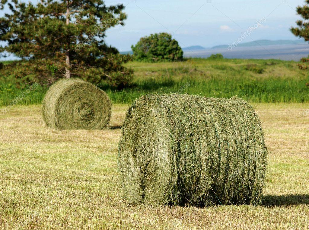 Two Hay Rolls in field