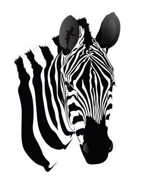 Balack and white Zebra