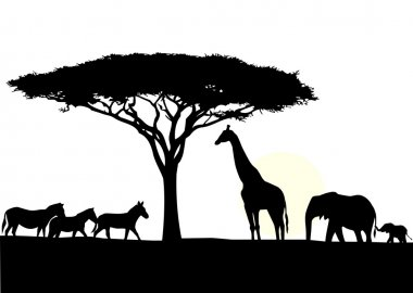 African elephant with baby silhouette
