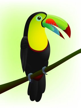 Vector illustration of Toucan bird clip art vector