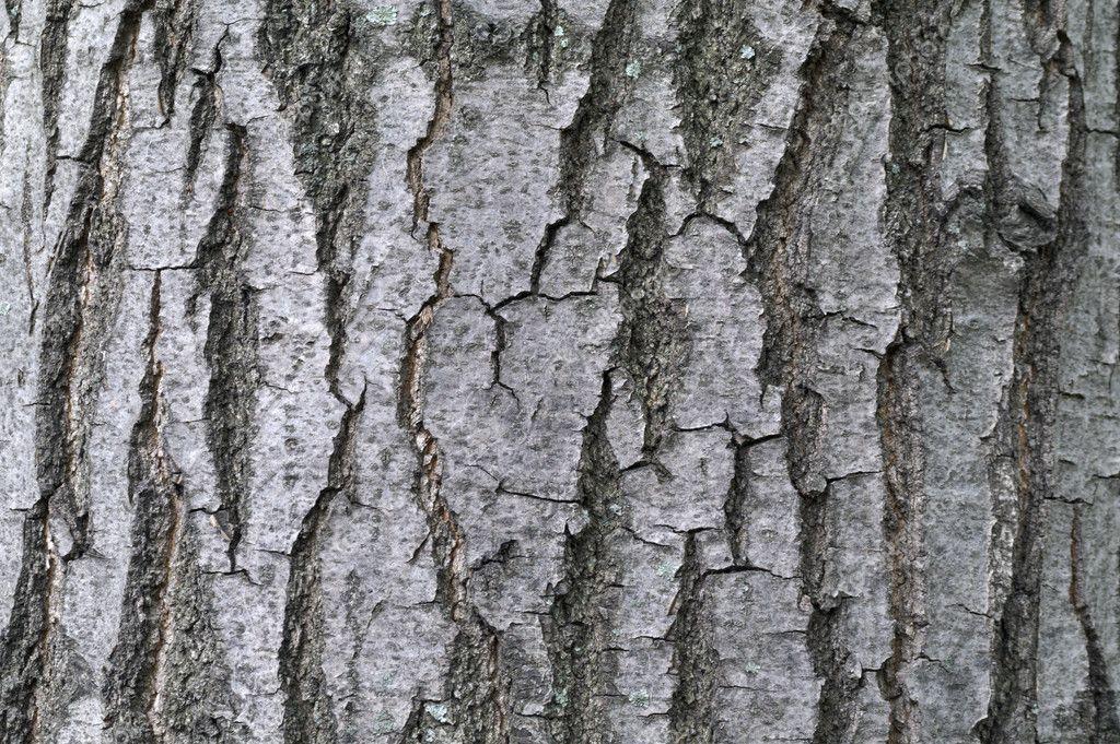 Textural Ash Tree Bark Textural Background — Stock Photo © Demianmm #10926443