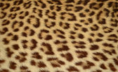 Fotografie Leopard tiger skin texture background