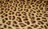 Fotografia pelle di leopardo tigre sfondo texture