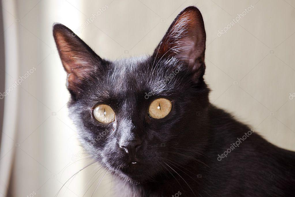 gratuit petite chatte noire Mark Dalton porno gay