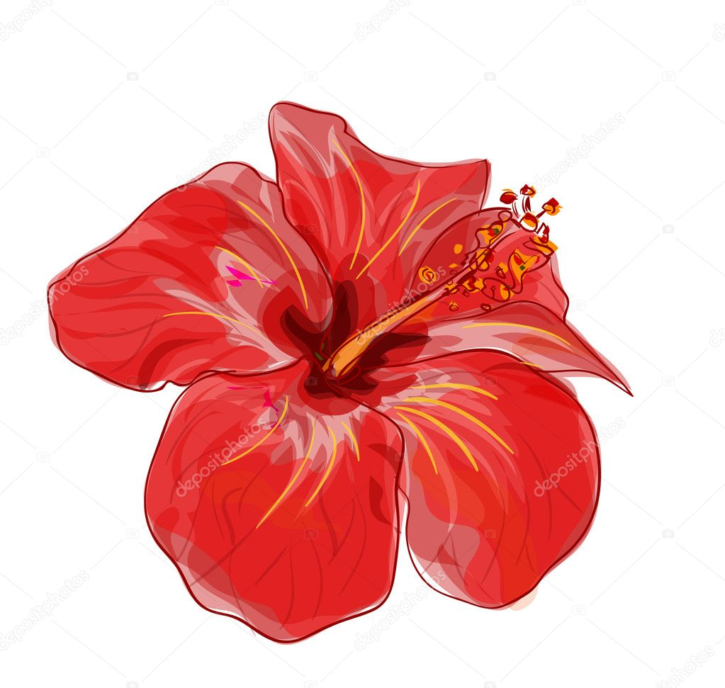 Red hibiscus flower. Vector image.
