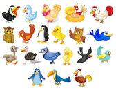 Photo Birds