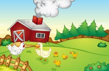 farm house and birds