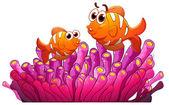 Fotografie Fisch und Algen