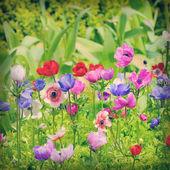 Fényképek Virág, kökörcsin, a mező