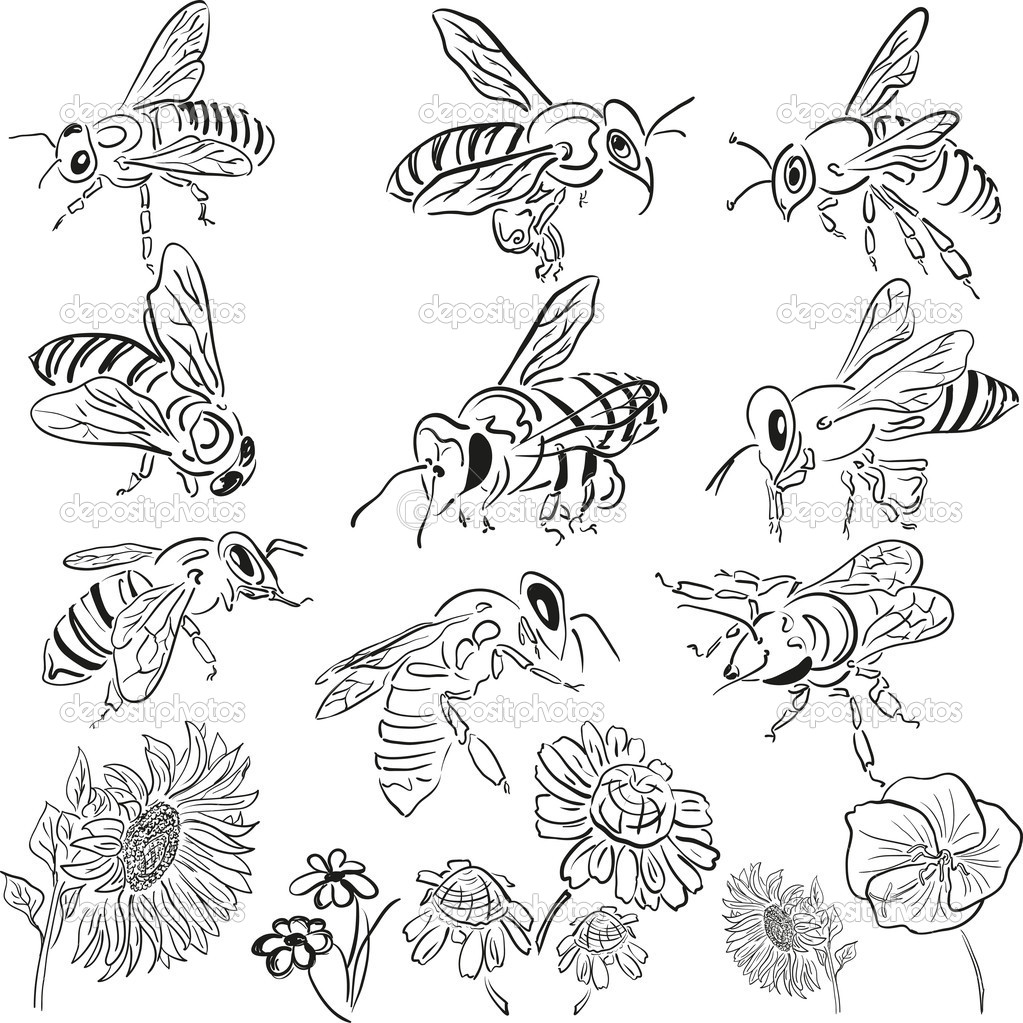 Vector bees with flowers