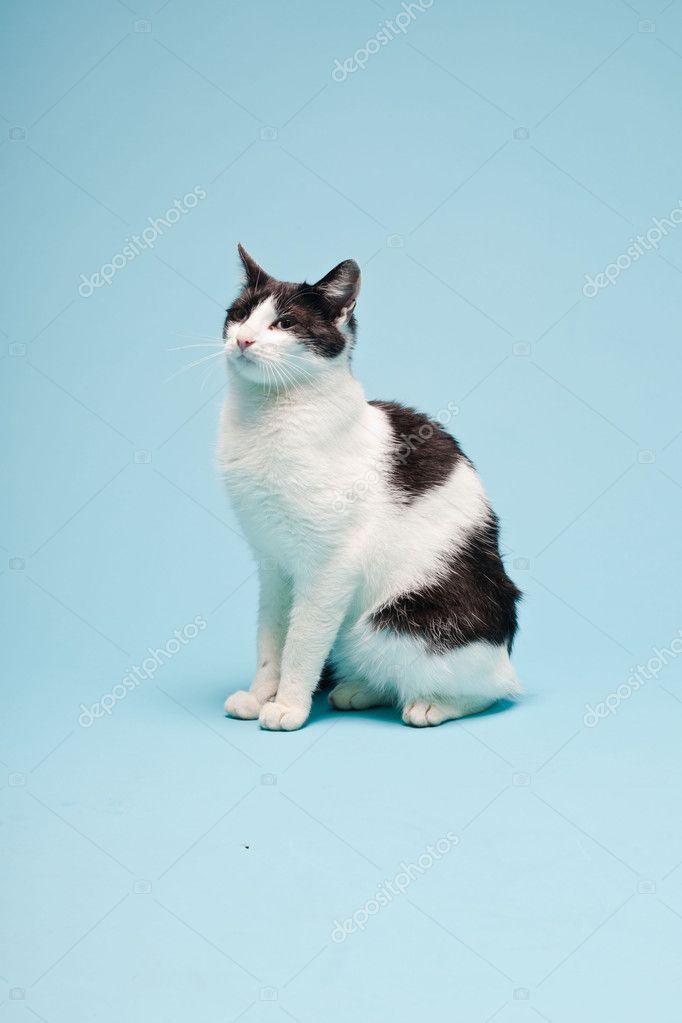 Белый кот студия