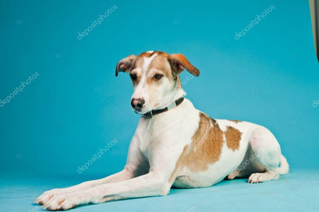 Großartig Haar Terrier Mix Hunde Galerie - Elektrische Schaltplan ...