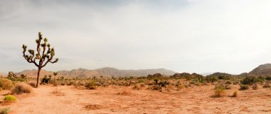 Panorama landscape of Joshua Tree National Park, USA.