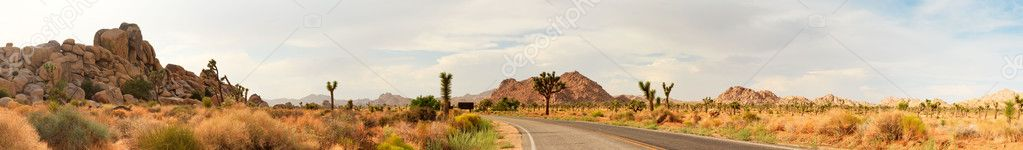 Panorama landscape of Joshua Tree National Park, USA. Road going through park.