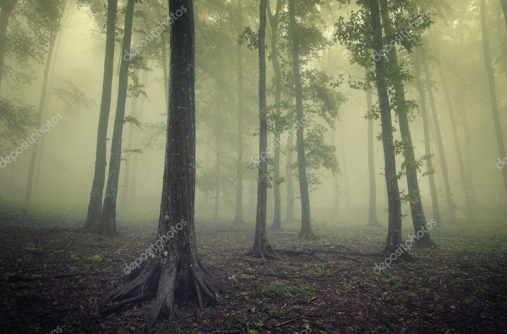 Фотообои Зеленый лес с туманом между деревьями