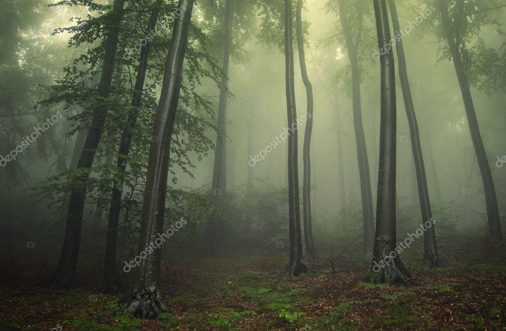Фотообои Green forest with fog between trees