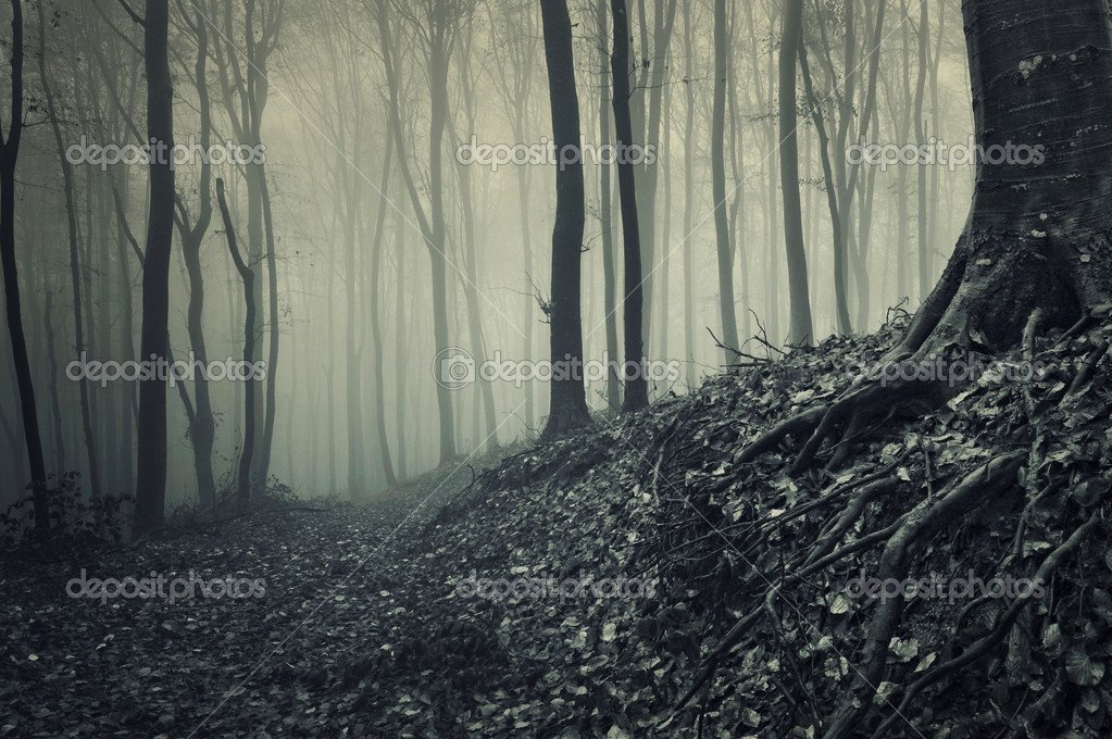 Фотообои Корни дерева от туманном лесу