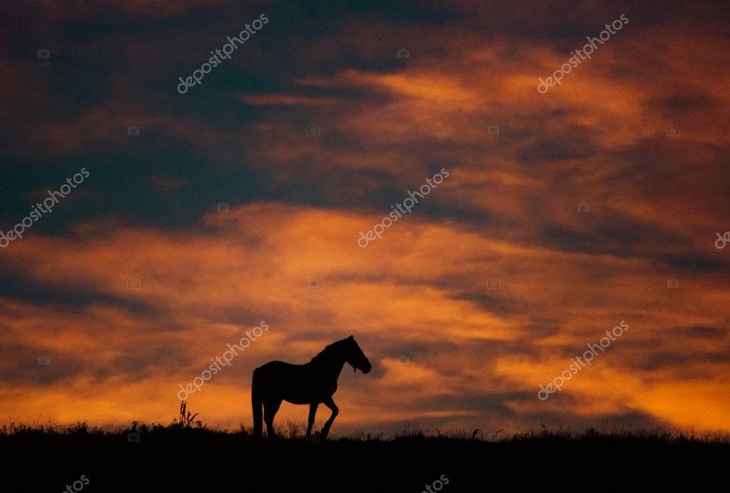 paisaje al atardecer con el caballo y hermosos colores cálidos ...