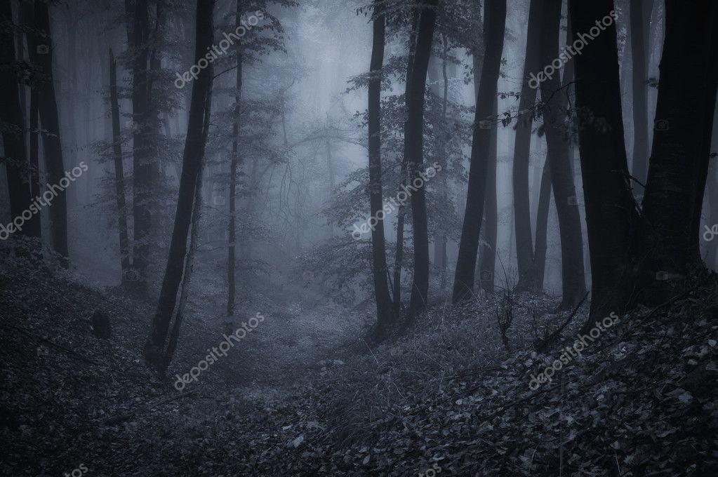 Фотообои Dark night in a forest