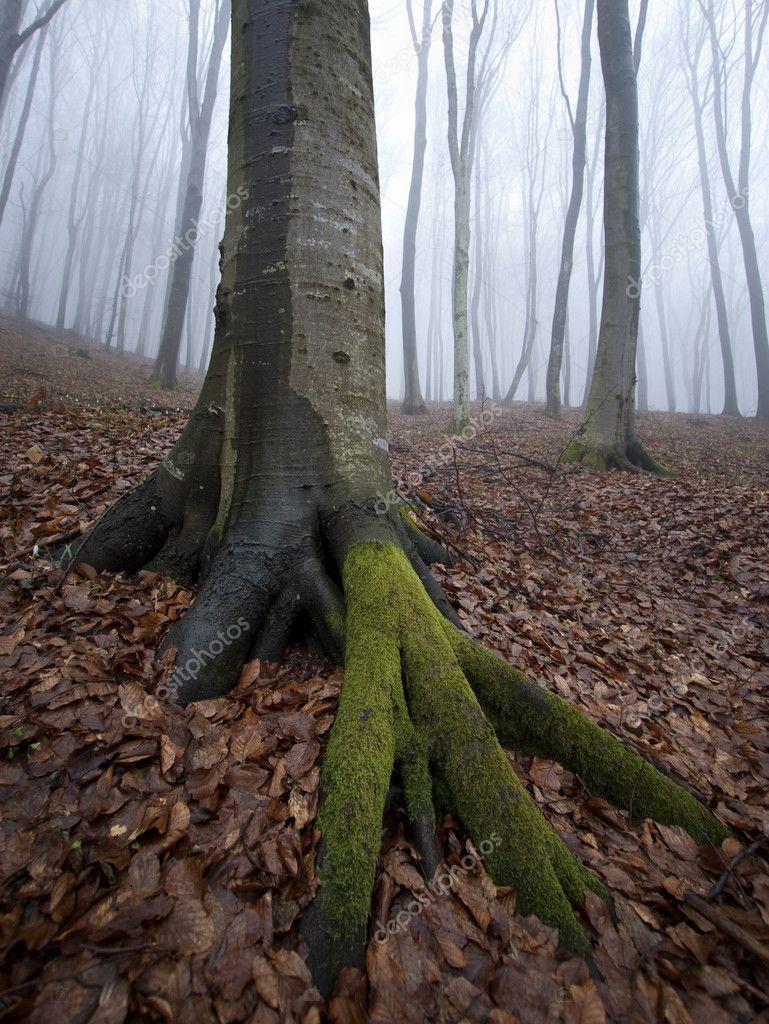 Фотообои Вертикальные фото дерево в туманном лесу