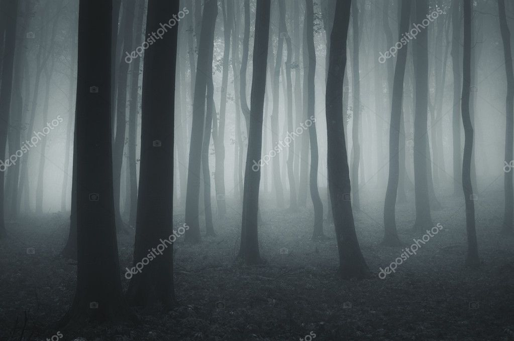 Фотообои Dark forest with fog and cold light