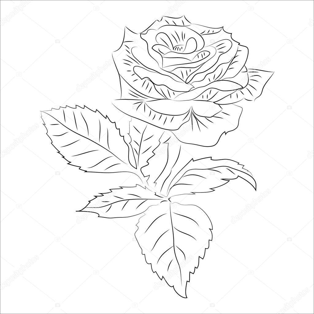 Róża Mała Kontur Rastrowych Zdjęcie Stockowe