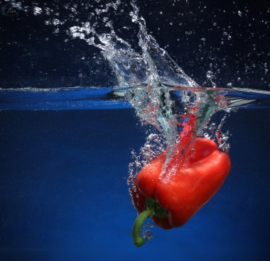 Red pepper falling into water. Blue background
